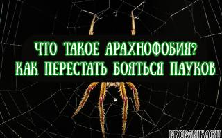 Что такое арахнофобия, и как перестать бояться пауков?