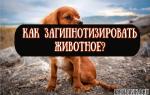 Как загипнотизировать кота, собаку или другое животное?