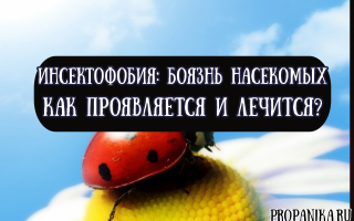 Как проявляется и лечится инсектофобия, или боязнь насекомых?