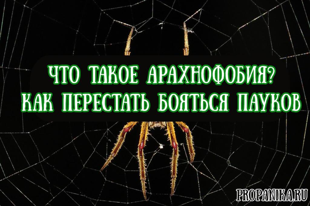 Что такое арахнофобия как перестать бояться пауков