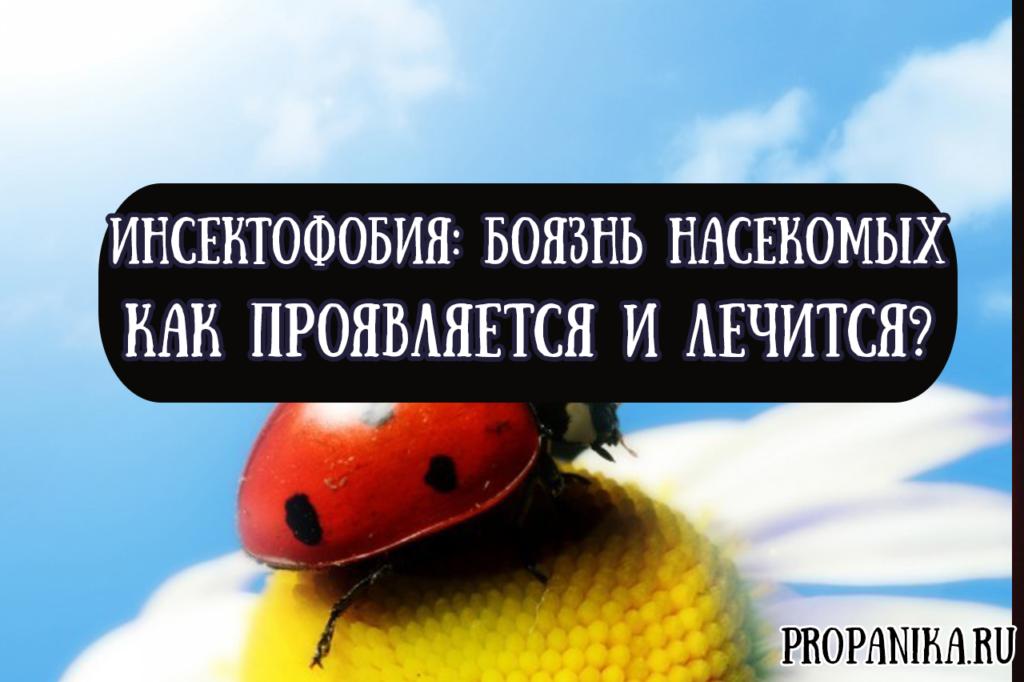 Как проявляется и лечится инсектофобия или боязнь насекомых